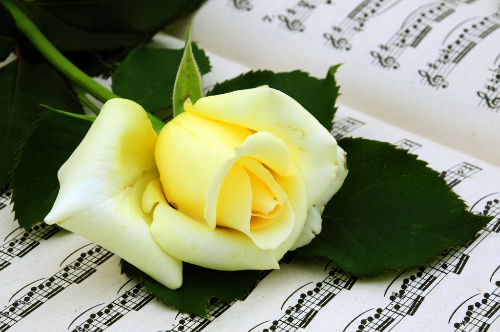 Music score with single flower